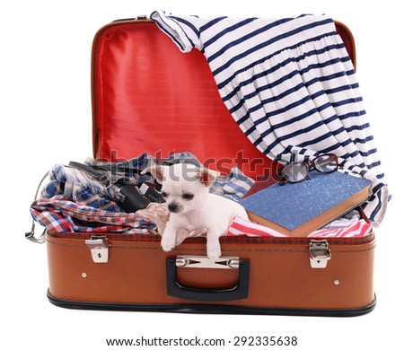 Adorable chihuahua dog in suitcase with clothing isolated on white - stock photo