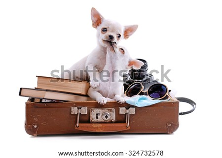 Adorable chihuahua dog in suitcase with things isolated on white - stock photo