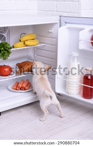Adorable chihuahua dog near open fridge in kitchen - stock photo