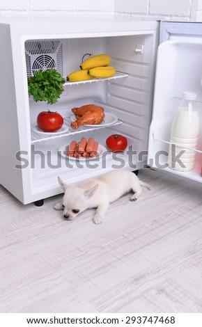 Adorable chihuahua dog near open fridge in kitchen - stock photo