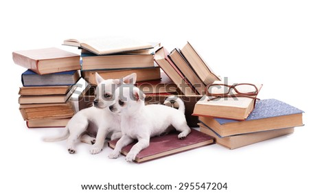 Adorable chihuahua dogs and heap of books isolated on white