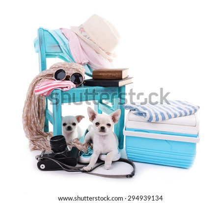 Adorable chihuahua dogs and heap of different things isolated on white - stock photo