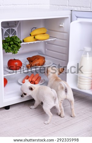 Adorable chihuahua dogs near open fridge in kitchen - stock photo