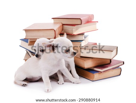 Adorable chihuahua dogs on heap of books isolated on white - stock photo