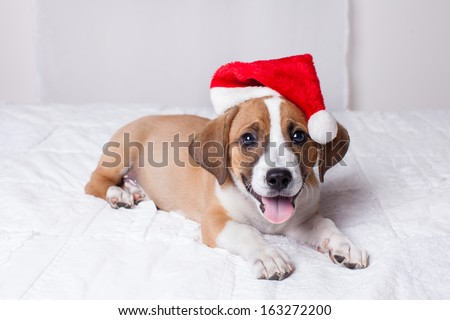 Adorable  Christmas Puppy on a bed - stock photo