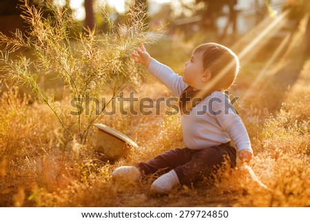 Adorable chubby little baby boy sitting in the grass and reaching into the Bush on the sunset sunlight - stock photo