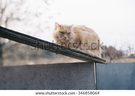 Adorable cute furry ginger cat outdoors - stock photo