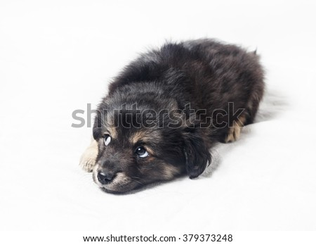 Adorable cute little puppy dog with sad eyes on a light background. - stock photo