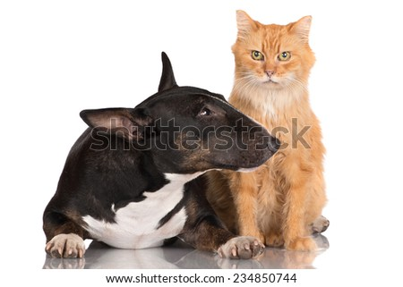 adorable dog and cat together