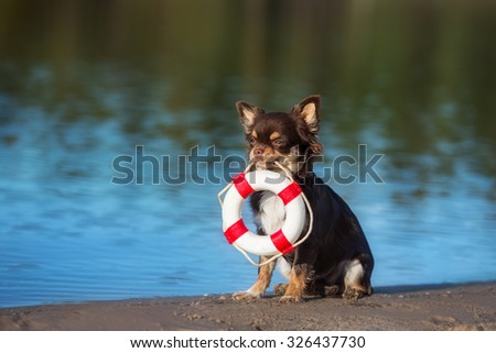 adorable dog holding life buoy - stock photo