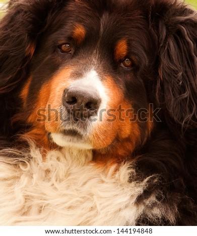 Adorable dog portrait - stock photo