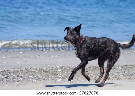 Adorable dog running along the beach shore on a beautiful sunny day