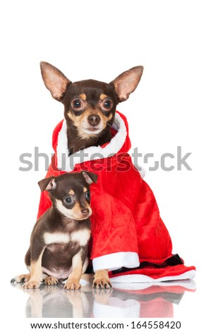 adorable dog with a puppy - stock photo
