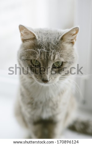 adorable domestic furry cat portrait - stock photo