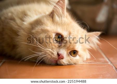 Adorable face of orange hair cat. - stock photo