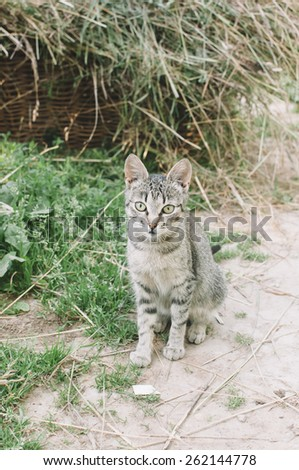 Adorable farm cat sitting outdoors - stock photo