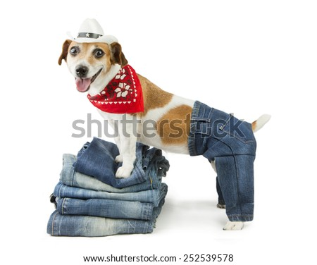 Adorable fashionable denim dog in the set of jeans things - stock photo