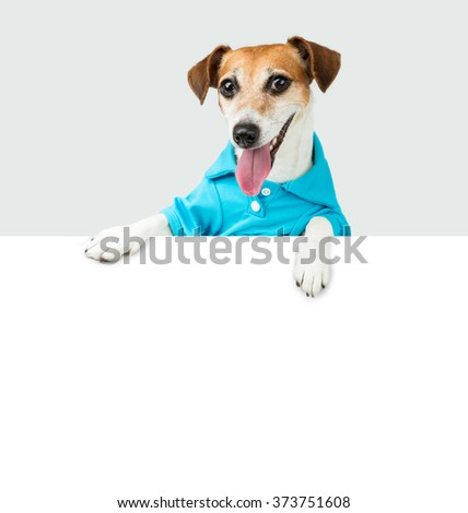 Adorable friendly welcoming Dog Jack Russell terrier in a blue dress shirt peeking out from behind a white banner. Places for your text to insert advertising information. Grey monochrome background - stock photo