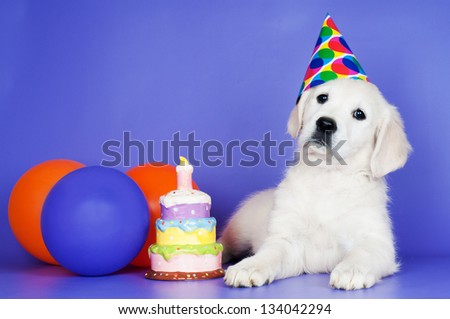 adorable golden retriever puppy birthday postcard - stock photo