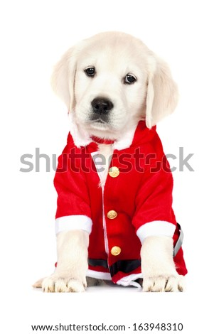 adorable golden retriever puppy in a santa costume - stock photo