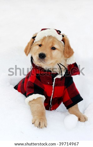 adorable golden retriever puppy wearing plaid jacket and hat and sitting in snow - stock photo