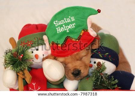 adorable golden retriever puppy with santa's helper hat sleeping with snowmen - stock photo
