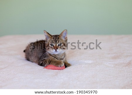 adorable gray tabby kitten lying on bed with pillow - stock photo