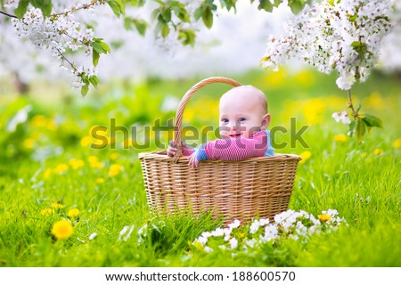 Adorable happy smiling baby boy sitting in a basket playing in a blooming spring apple tree garden with beautiful white flowers and green grass with daffodils on a sunny summer morning - stock photo