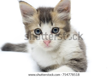 adorable kitten actions on white isolated background