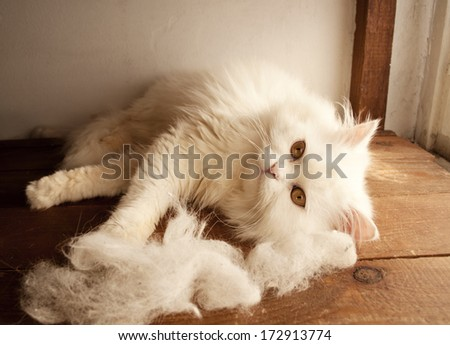 Adorable kitten and piles of cat hair - stock photo