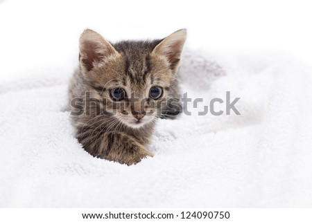 adorable kitten laying on a white blanket