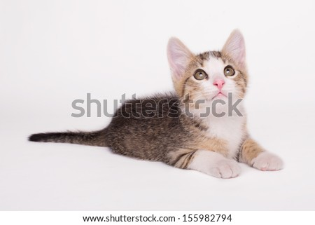Adorable kitten on a white background - stock photo