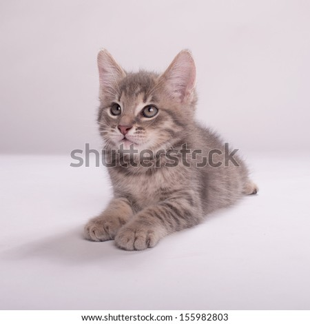 Adorable kitten on a white background