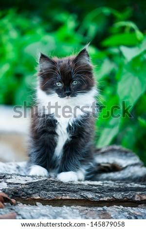 Adorable kitten outdoor - stock photo