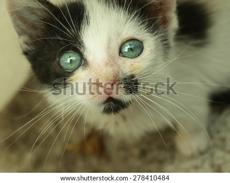 Adorable kitten with beautiful eyes looking at camera - stock photo