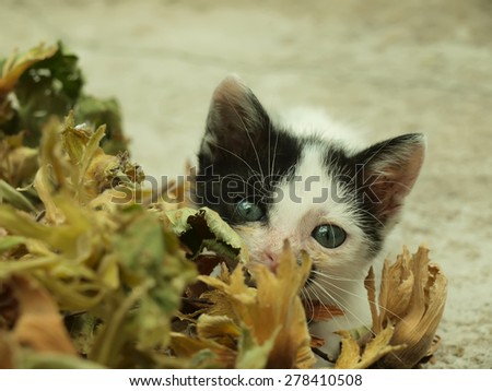 Adorable kitten with beautiful eyes playing hide and seek - stock photo