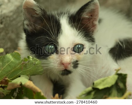 Adorable kitten with beautiful eyes sitting near leaves  - stock photo