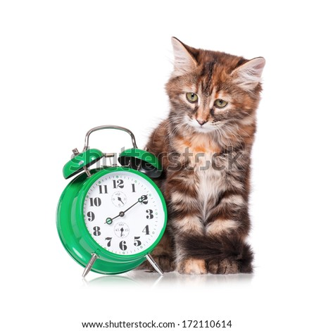 Adorable kitten with green alarm clock, isolated on white background - stock photo