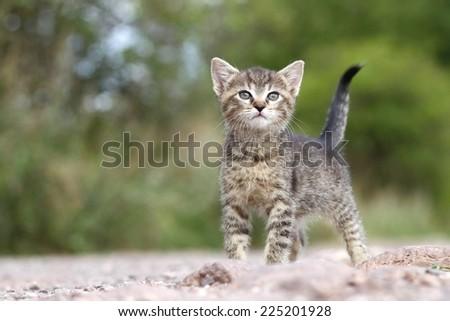 Adorable kitty - stock photo