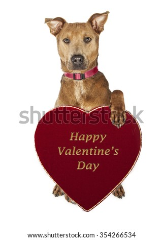 Adorable large mixed breed dog holding a Happy Valentine's Day candy box - stock photo