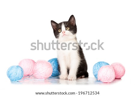 Adorable little black and white kitten with balls of yarn - stock photo