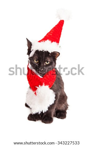 Adorable little black kitten wearing a red Christmas Santa Claus hat and scarf