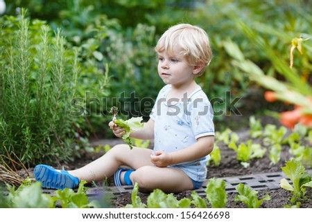 Adorable little blond boy picking salad in a garden