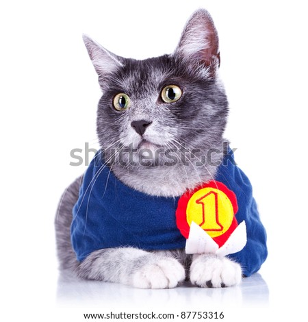 adorable little cat champion staying still for the camera, on white background - stock photo