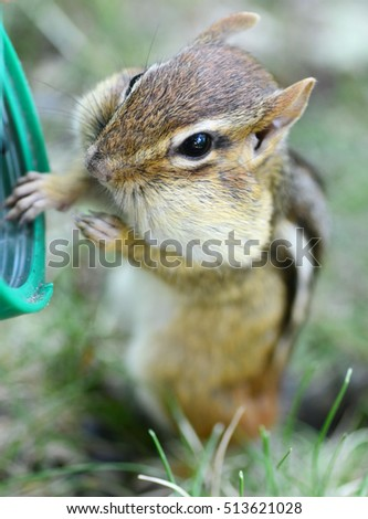 Adorable little chipmunk with her hand on a sunflower seed container
