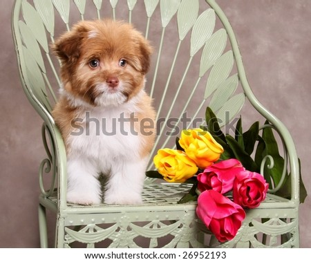 Adorable Little dog with Tulips