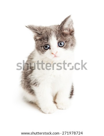 Adorable little five week old kitten sitting and tilting head - stock photo