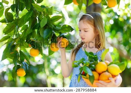Adorable little girl picking fresh ripe oranges in sunny orange tree garden in Italy - stock photo