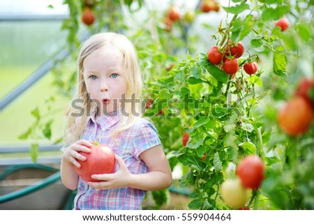 Adorable little girl picking fresh ripe organic tomatoes in a greenhouse on warm summer evening