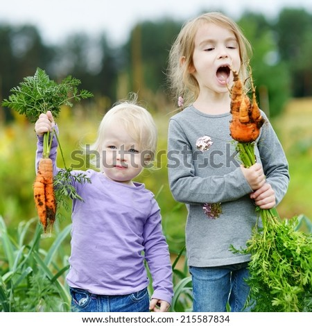 Adorable little girls picking carrots in a garden - stock photo